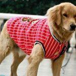 Интересные и простые выкройки одежды для собак: советы по пошиву своими руками