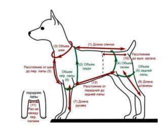 Интересные мастер-классы и простые выкройки комбинезонов для собак