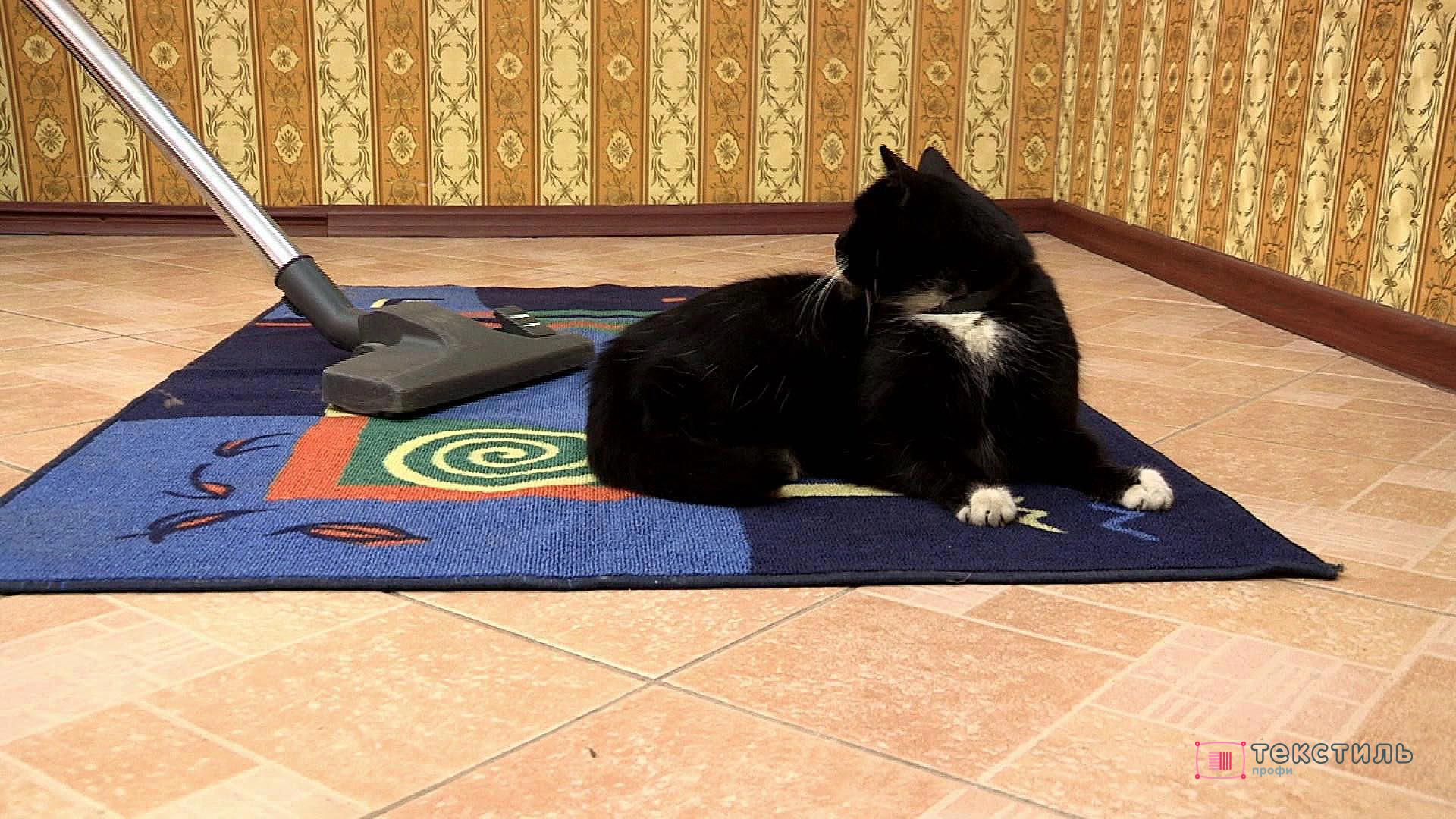 Как очистить ковер от «проделок» котов: гид по уборке кошачьей рвоты, экскрементов и мочи