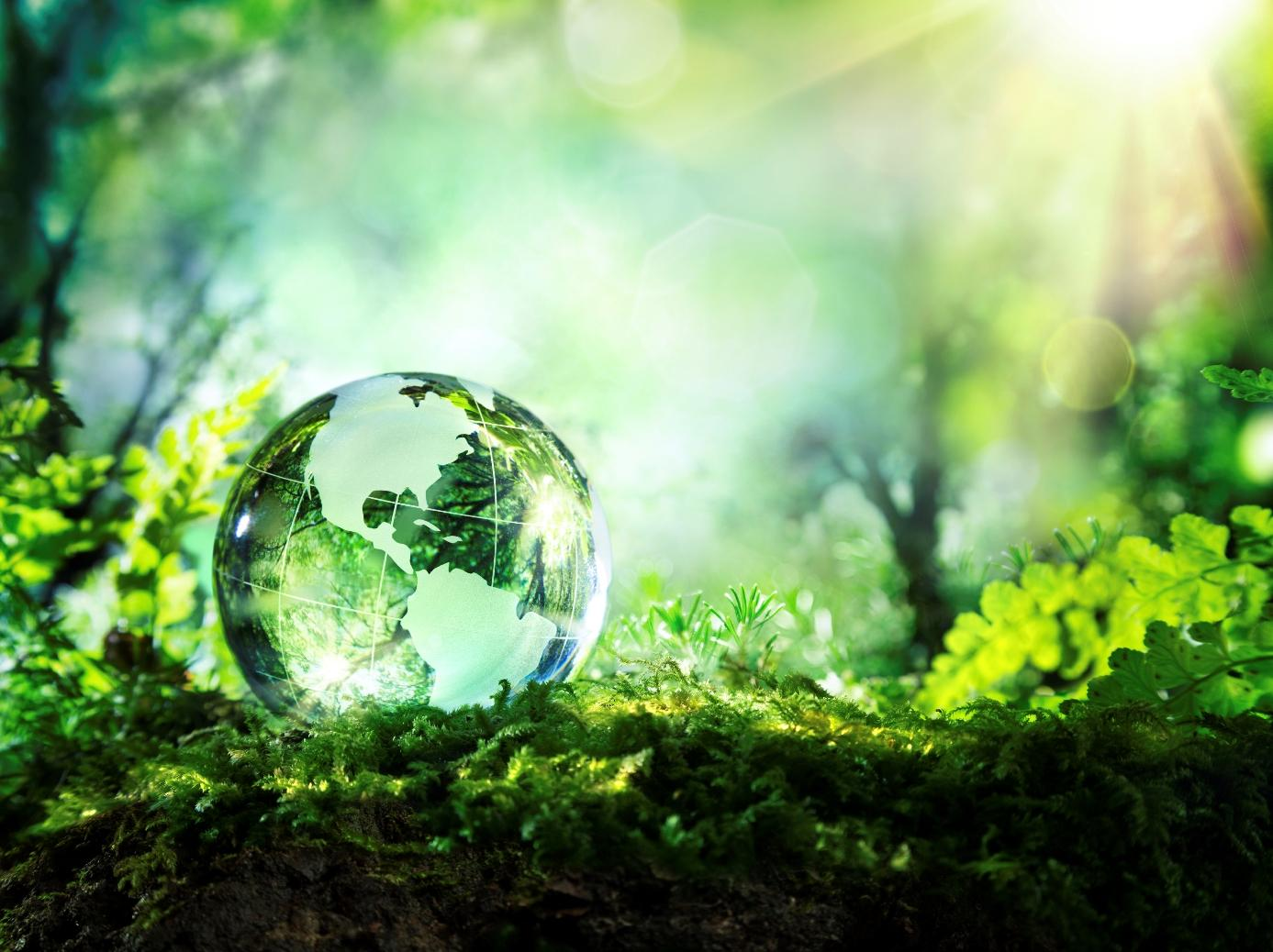 Эко-ковер: как выбрать ковер из натуральных материалов, безопасный для здоровья и природы?
