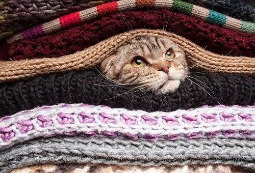 чистка одежды от шерсти