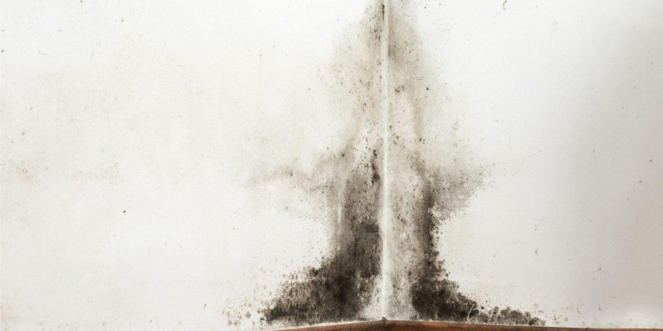 Что такое токсичная плесень и как с ней бороться?