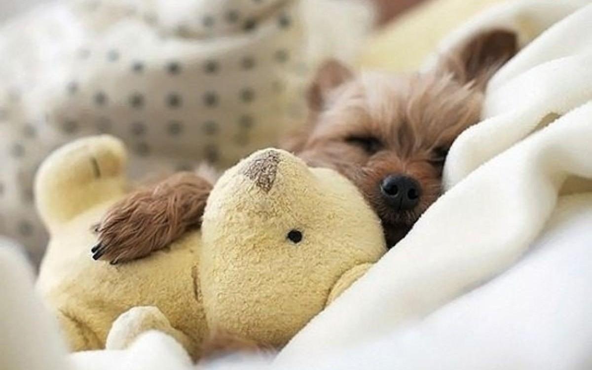 Картинки щенки милые и красивые спящие первыми